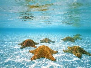 cayman-starfish